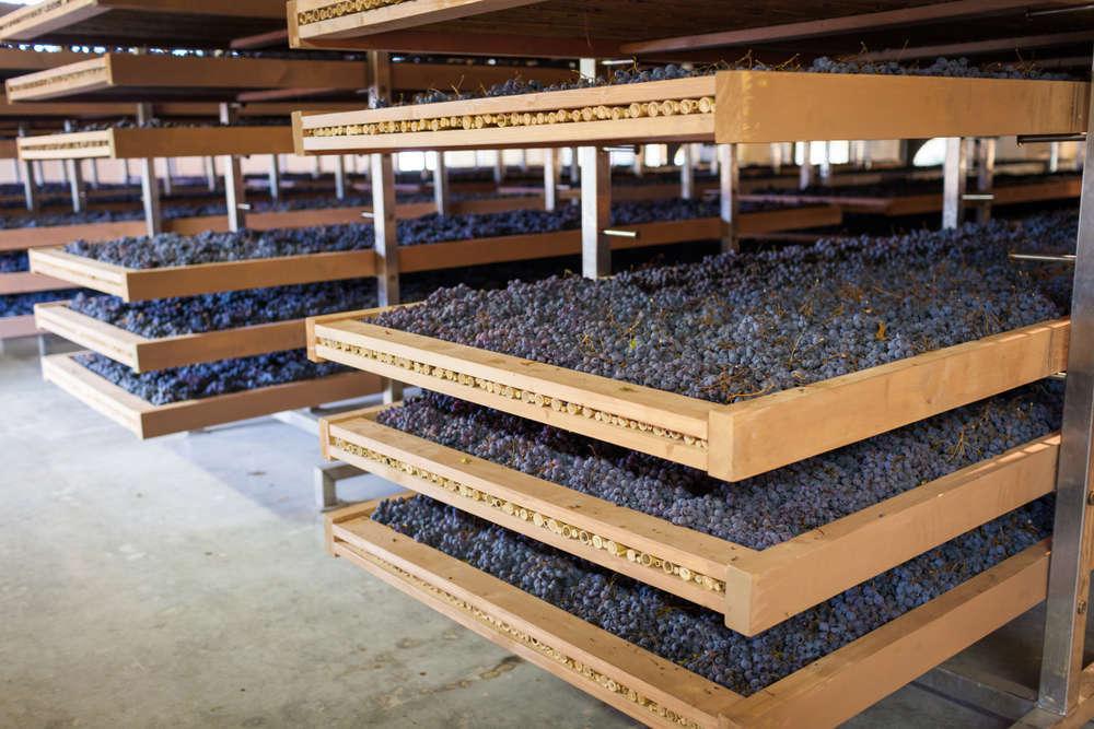 La maquinaria vinícola está de actualidad
