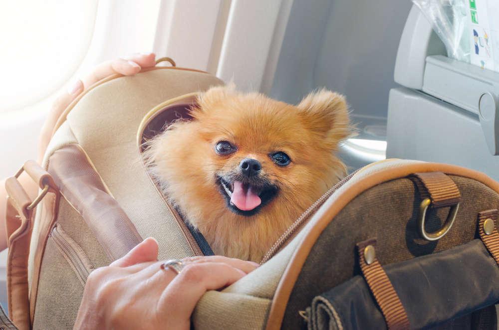 Transporte de animales por avión: una medida para evitar el abandono de mascotas en este mundo globalizado